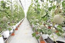 Thành phố Hồ Chí Minh phát triển nông nghiệp đô thị