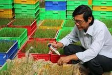 Tiến sĩ Trần Tấn Phương-Người góp phần chọn tạo nhiều giống lúa đặc sản Sóc Trăng