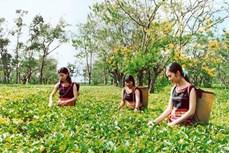 Du lịch Gia Lai trong liên kết phát triển du lịch Việt Nam - Lào - Campuchia