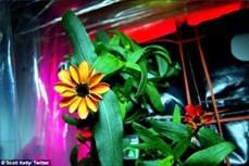 Lần đầu tiên hoa nở trên Trạm Vũ trụ quốc tế