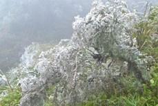 Lào Cai: Khả năng có mưa tuyết tại Ý Tý, Sa Pa