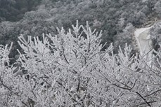Vẻ đẹp băng tuyết trên núi Phja Oắc