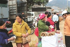 Nguyễn Huệ xóa nghèo nhờ nghề làm miến dong truyền thống