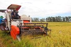 Thủ tướng Chính phủ chỉ đạo đẩy mạnh thu mua, tiêu thụ lúa gạo