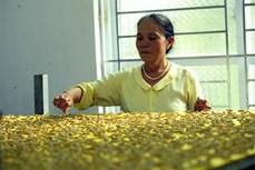 Nghệ nhân ưu tú Phan Thị Thuận - người gìn giữ và phát triển nghề nuôi tằm dệt lụa truyền thống của quê hương