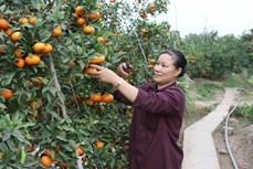 Thủ tướng chỉ thị đẩy mạnh xây dựng nông thôn mới