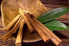 Huyện Trà Bồng (Quảng Ngãi) phát triển mạnh vùng chuyên canh cây quế
