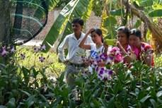 Nông dân Khmer phát triển nông nghiệp đô thị