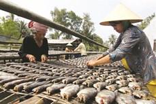 Nghề làm cá khô bổi ở Cà Mau cho thu nhập cao