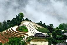 Vẻ đẹp ruộng bậc thang ở Hà Giang