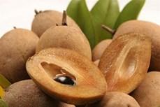 Đặc sản trái cây Sapoche Mặc Bắc