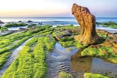 Thiên đường Cổ Thạch mùa rêu
