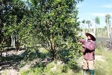 Ông Nguyễn Đông thu nhập cao từ kinh tế trang trại