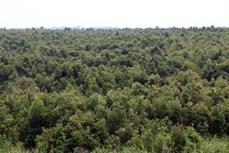 Bảo tồn, phát triển bền vững các giá trị Khu dự trữ sinh quyển thế giới Kiên Giang