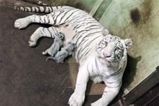 Chỉ thị của Thủ tướng Chính phủ về phòng ngừa, đấu tranh với hành vi xâm hại các loài động vật hoang dã trái pháp luật