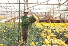 Sắc xuân ở làng hoa Hà Đông