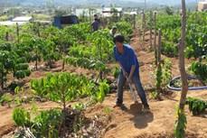Cấp Giấy chứng nhận quyền sử dụng đất đối với diện tích đất tăng thêm