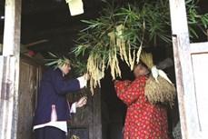"""登高山探索黄树皮红瑶族人""""稻魂""""祭祀仪式"""