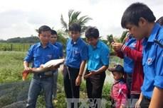 Khởi nghiệp thành công từ mô hình sản xuất giống cá lăng nha