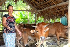 """Nông dân miền núi Thanh Sơn thoát nghèo nhờ """"Ngân hàng bò"""""""