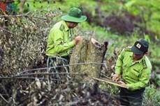 Điện Biên: Khó khăn trong công tác quản lý, bảo vệ rừng đặc dụng Mường Phăng