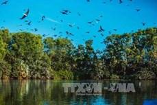 Đánh thức tiềm năng du lịch sinh thái Bạc Liêu