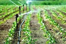 Trà Vinh có hơn 11.600 ha đất sản xuất áp dụng công nghệ tưới tiết kiệm nước