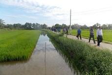 Phát triển mô hình sản xuất lúa hữu cơ sinh học