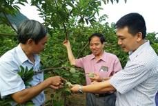 Thái Bình liên kết sản xuất, phát triển nông sản sạch