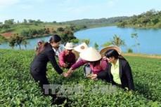 Du lịch canh nông thu hút khách đến Đà Lạt