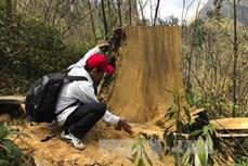 Phản hồi thông tin của TTXVN: Điện Biên tổ chức tuyên truyền cho người dân ký cam kết bảo vệ rừng