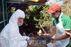 Chủ động phòng ngừa dịch cúm gia cầm phát sinh