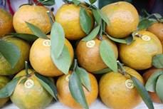 Ăn trái cây nào để giải nhiệt và bổ sung vitamin tăng khả năng miễn dịch