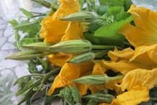 Dược thiện từ hoa bí ngô