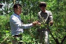Khởi nghiệp từ nghề nuôi chim yến và trồng cây dược liệu