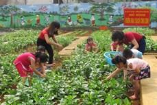 Hiệu quả mô hình vườn rau sạch cho trẻ mầm non