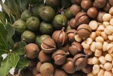 7 tác dụng bất ngờ từ hạt Mắc ca (Macadamia)