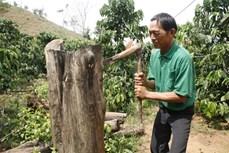 Những nghệ nhân thổi hồn vào gỗ ở Kon Tum