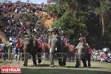 西原野象驯养业与赛象节