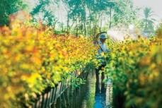 Làng hoa Sa Đéc – Danh thơm trăm tuổi