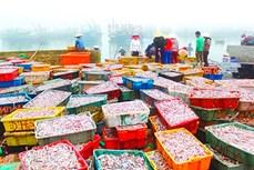 Bình minh chợ cá đảo Nghi Sơn