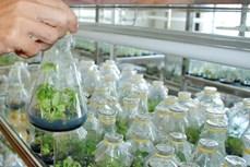 Đẩy mạnh ứng dụng khoa học công nghệ vào sản xuất nông nghiệp (Bài 2)