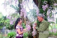 Vườn hoa lan độc nhất vô nhị ở Tuyên Quang