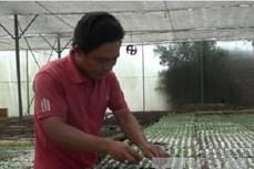 Để kinh tế trang trại phát triển hiệu quả và bền vững