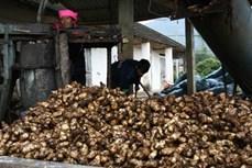 Làng nghề Miến dong Côn Minh – Hương rừng Bắc Kạn