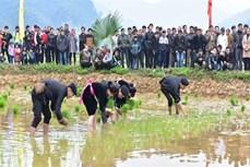 Kinh nghiệm sản xuất nông nghiệp qua tục ngữ người dân tộc Tày