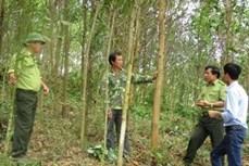 Trồng rừng gắn với kinh tế trang trại cho hiệu quả kinh tế cao