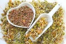 Lợi ích của rau mầm