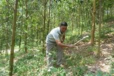 造林帮助山区安山同胞摆脱贫困