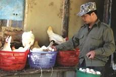 凭借生物安全养鸡模式致富的陈文勇